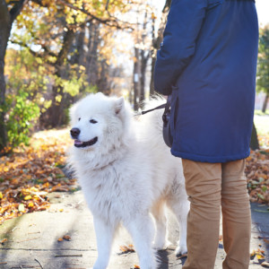 If I Get Divorced, I Get to Keep the Dog, Right? by Don Sinkov